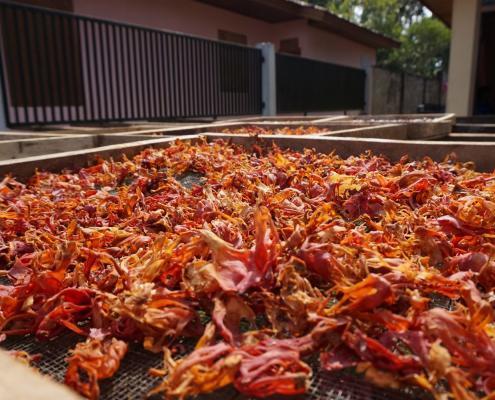 Foelie van Verstegen Spices & Sauces
